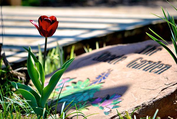 Austin_shade-garden