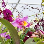 Orchid Show & Sale Mini Classes