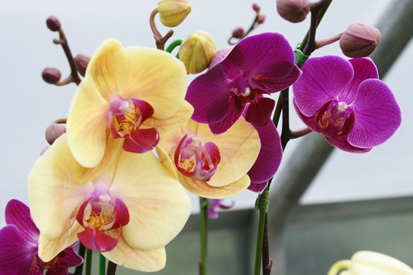 Orchid Care Basics @ Botanical Garden of the Ozarks