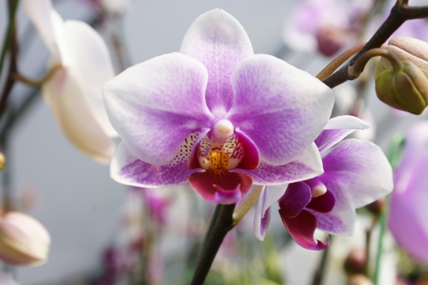 Orchid Care Basics @ Botanical Garden of the Ozarks
