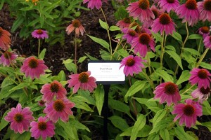 Annual Plant Sale Members-Only Preview @ Botanical Garden of the Ozarks | Fayetteville | Arkansas | United States