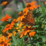 Sensory Garden Butterfly