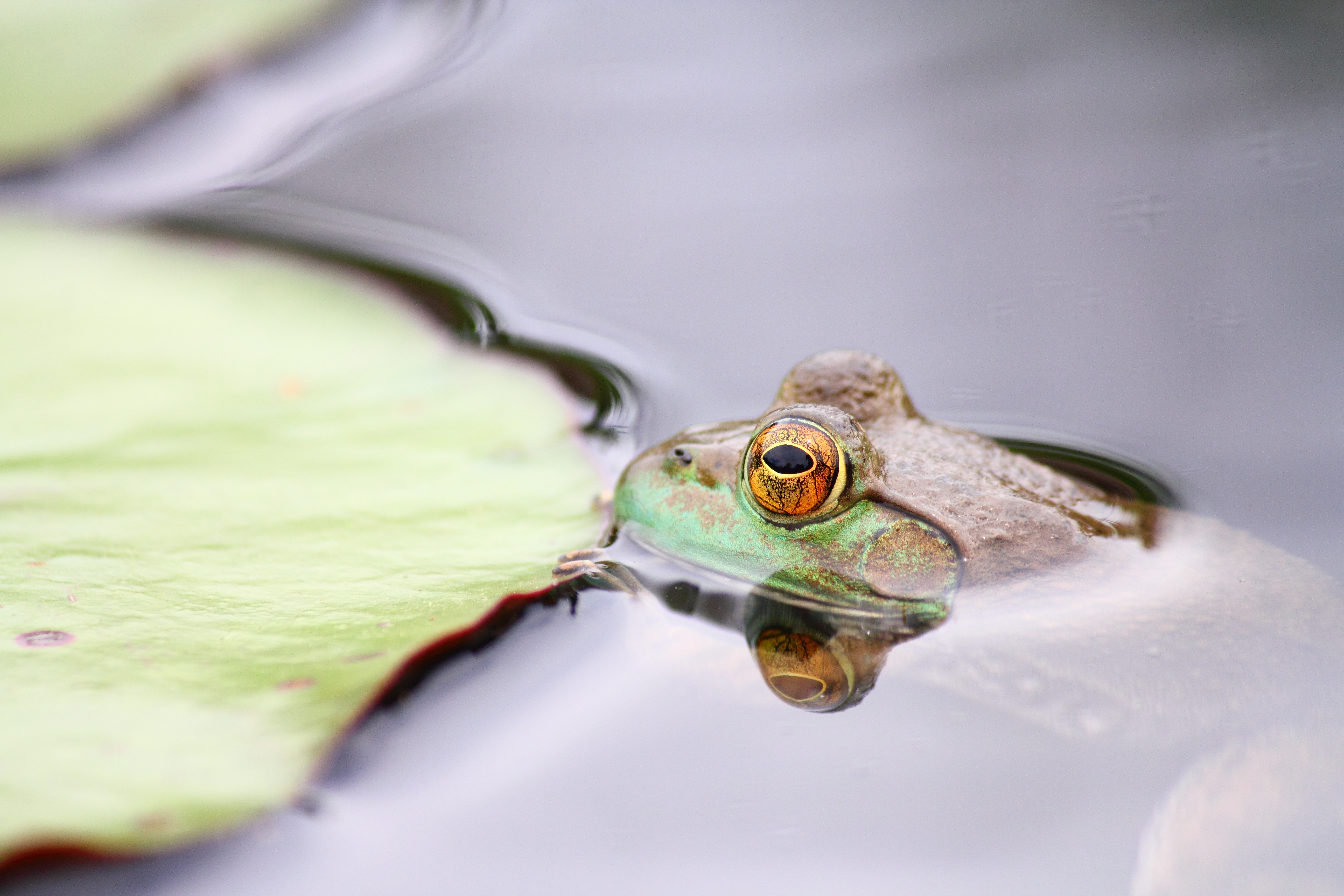 Little Sprouts: Flopping Frogs