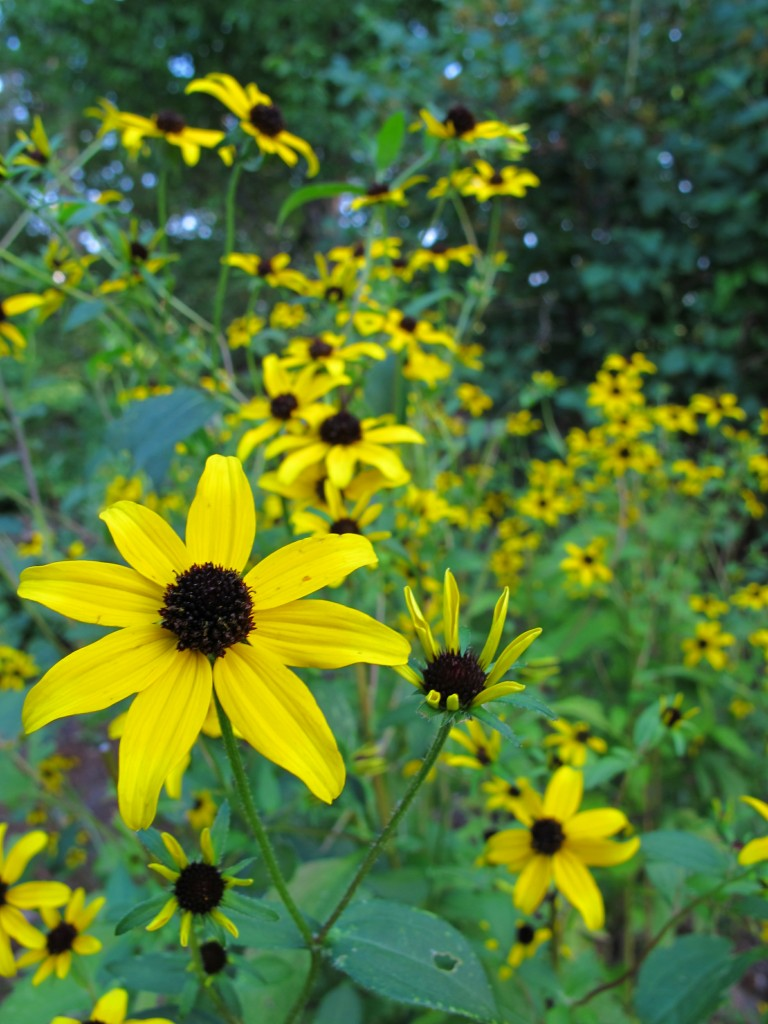 Taming the Wild: Natives in your Landscape @ Botanical Garden of the Ozarks