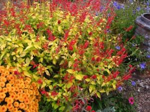 Invasive Plants @ Botanical Garden of the Ozarks