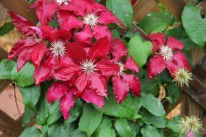 Through the Garden Gate Tour @ Botanical Garden of the Ozarks